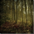Floor of Yellow and Rust Forest View Wrapped Canvas Giclee Print