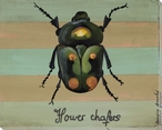 Flower Chafers Bug Wrapped Canvas Giclee Print Wall Art