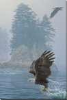 Fly Fishing Bald Eagle Bird Wrapped Canvas Giclee Print Wall Art
