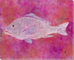 Frost Red Snapper Fish Wrapped Canvas Giclee Print Wall Art
