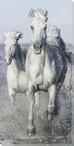 Full On Horses Running Wrapped Canvas Giclee Art Print Wall Art