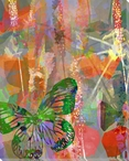 Garden Color Study Butterfly 1 Wrapped Canvas Giclee Print
