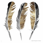 Glistening Feathers Absorbent Beverage Coasters, Set of 12