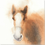 Golden Boy Horse Wrapped Canvas Giclee Print Wall Art