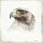 Golden Eagle Bird Sketch Wrapped Canvas Giclee Print Wall Art