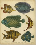 Goldsmith's Spinous Fishes Wrapped Canvas Giclee Print Wall Art