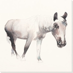 Gray Beauty Horse Wrapped Canvas Giclee Print Wall Art