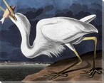 Great White Heron Bird Wrapped Canvas Giclee Print Wall Art