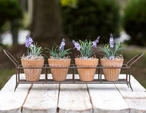 Green Rust Iron Caddy Planter with Four Terra Cotta Pots