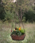 Green Rust Oval Hanging Wire Basket with Terra Cotta Pot