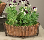 Green Rust Oval Wire Basket with Terra Cotta Pot