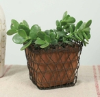 Green Rust Woven Wire Square Basket with Terra Cotta Pot