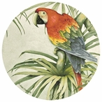 Green Winged Macaw 2 Beverage Coasters by Jean Cassady, Set of 12