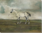 Grey Hunter Horse in a Landscape Wrapped Canvas Giclee Print