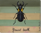 Ground Beetle Bug Wrapped Canvas Giclee Print Wall Art