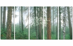 Gunflint Forest Scenic Wrapped Canvas Giclee Wall Art Print, Set of 5