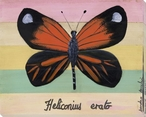 Heliconius Erato Butterfly Wrapped Canvas Giclee Print Wall Art