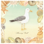 Herring Gull Bird Absorbent Beverage Coasters by Driscoll, Set of 8
