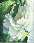 In the Shadows Flower Wrapped Canvas Giclee Print Wall Art