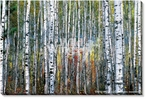 Indian Summer Photographic Print Wrapped Canvas Giclee Print