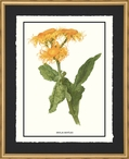 Inula Roylei Flowers Matted and Framed Art Print Wall Art