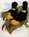 Keel Billed Toucan Birds Wrapped Canvas Giclee Print Wall Art
