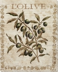L' Olive Wrapped Canvas Giclee Print Wall Art