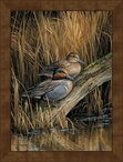 Large Green-Winged Teal Ducks Framed Canvas Art Print Wall Art