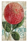 Large Red Zinnia Flower Vintage Style Metal Sign