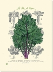 Le Chou de Russe Cabbage Wrapped Canvas Giclee Print Wall Art