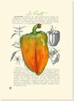 Le Piment Bell Pepper Wrapped Canvas Giclee Print Wall Art
