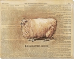 Leicester Sheep Wrapped Canvas Giclee Print Wall Art