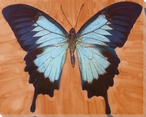 Light and Dark Blue Butterfly Study Wrapped Canvas Giclee Print