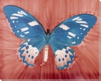 Light Blue Butterfly Study Wrapped Canvas Giclee Print Wall Art