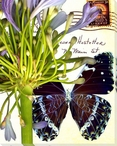 Lilies of the Nile Butterfly 3 Wrapped Canvas Giclee Print