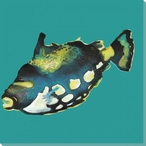 Little Blackfish on Green Wrapped Canvas Giclee Print Wall Art