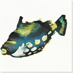 Little Blackfish Wrapped Canvas Giclee Print Wall Art