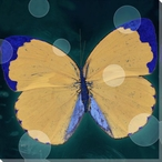 Lovely Butterfly Study Wrapped Canvas Giclee Print Wall Art