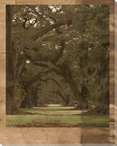 Low Country Trees I Wrapped Canvas Giclee Print Wall Art