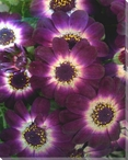 Luxurious Flowers IV Wrapped Canvas Giclee Print Wall Art