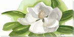 Magnolia Flower on White Wrapped Canvas Giclee Print Wall Art