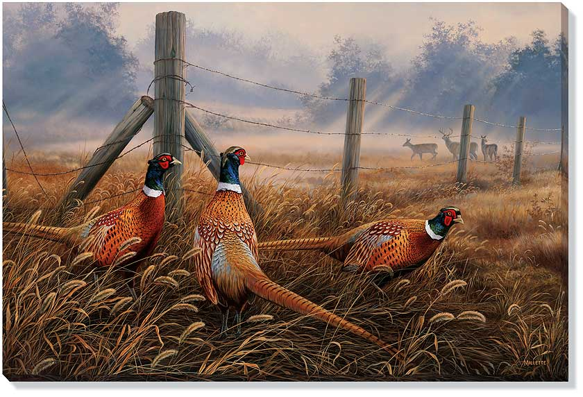 Meadow mist pheasant birds wrapped canvas giclee print wall art wall decor wild wings - Pheasant wallpaper for walls ...
