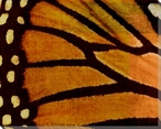 Monarch Butterfly II Wrapped Canvas Giclee Print Wall Art
