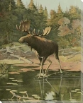 Moose in the Wild Wrapped Canvas Giclee Print Wall Art