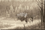 Morning Trio White Tail Deer Wrapped Canvas Giclee Art Print Wall Art