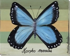 Morpho Menelos Butterfly Wrapped Canvas Giclee Print Wall Art