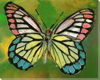 Multicolor Butterfly Study Wrapped Canvas Giclee Print Wall Art