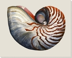 Nautilus Shell Side Wrapped Canvas Giclee Print Wall Art