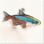 Neon Fish Wrapped Canvas Giclee Print Wall Art