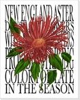 New England Astor Flower Wrapped Canvas Giclee Print Wall Art